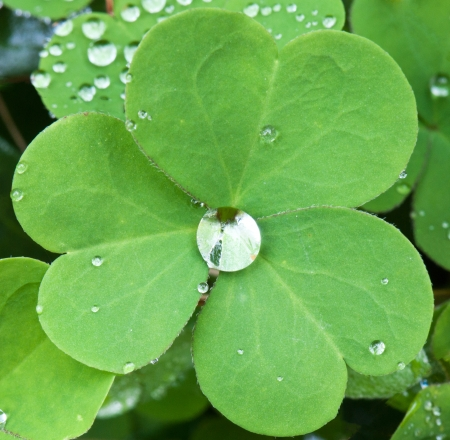 dewdrops on a clover leaf Stock Photo