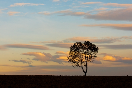 reclusion: silhouette of a tree at sunset