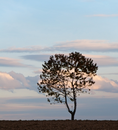 reclusion:  tree at sunrise