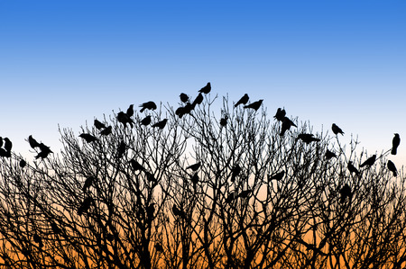 silhouette of many birds on a treetop at sunset photo