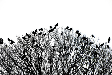 silhouette of many birds on a treetop - black and white shot photo