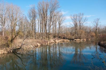 mirroring: trees mirroring in the lake