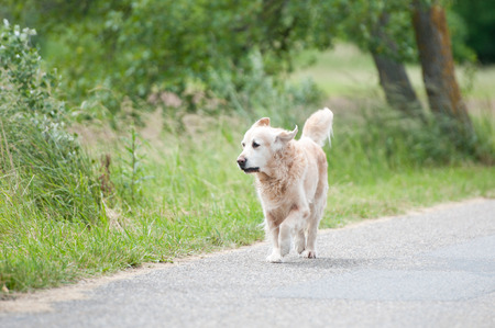 straying dog on the roadside Stock Photo