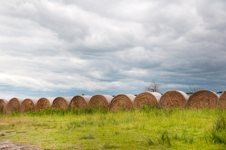 haybales in a row on the field on a gloomy day Stock Photo