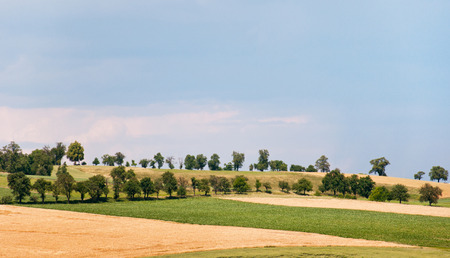 reclusion: hill land with trees in a rural landscape in Austria on a sunny day