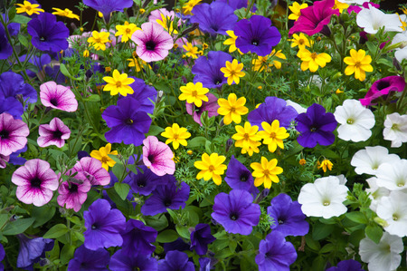 mix of different colorful outdoor plants