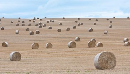 many hay bales on a field in Austria
