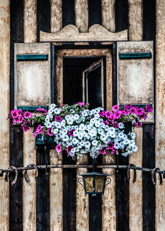 laths: wooden window with lattice-blinds decorated with white and pink petunia flowers Stock Photo