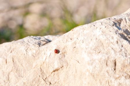 mojo: ladybug sitting on a stone
