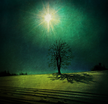 leafless tree in winter casting a shadow over the snowy meadow Stock Photo