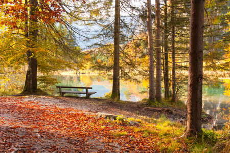 bench at the shore of a lake in an autumnal forest