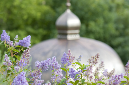 bloomy: lilac bulleia in front of a summerhouse cupola