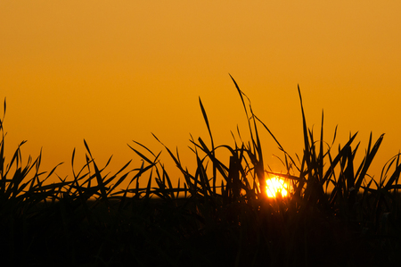 agleam: grass against the sky at sunset