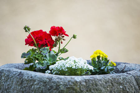 bloomy: geranium and marigold flowers potted in a stone cist