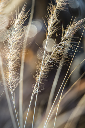 reed and bokeh