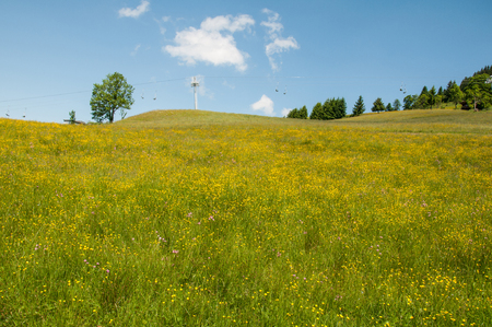 flowering dandelion meadow - in the background a chairlift in the Tyrolean alps in Austria Stock Photo