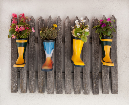 Wooden fence on a house wall decorated with different flowers planted in colorful rubber boots Stock Photo