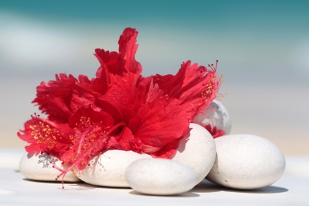 red flower and white little stones used for massage and spa photo