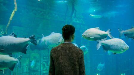 Underwater life, tourism, education and entertainment concept. Back view of woman silhouette looking at fish in large public aquarium tank at oceanarium with aquamarine low light illumination Stock fotó