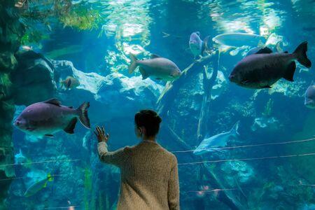 Woman silhouette looking at fish in large public aquarium tank at oceanarium. Aquamarine low light illumination - back view. Tourism, education, underwater life and entertainment concept