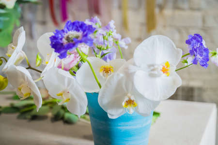 Colorful beautiful flowers: white orchids and purple scabiosas in pot at studio, flower shop - close up. Floristry, romantic, holiday, birthday, valentine day, wedding, spring, celebration concept