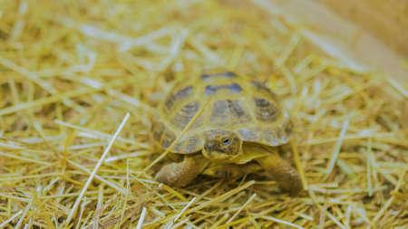 Little turtle slowly crawls forward at zoo