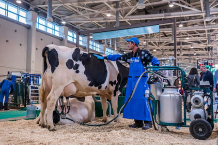 MOSCOW, RUSSIA - JUNE 01, 2019: Cattle dairy exhibition. Man using automated cow milking facility equipment. Farming, automated technology equipment, agriculture industry, animal husbandry concept Редакционное