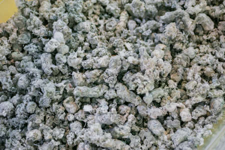 Plastic recycling, renewable resource - heap of secondary soft plastic granules - polystyrene, polyethylene, polypropylene pellets at exhibition, trade show - close up top view