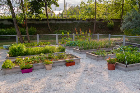 Vegetable garden with assortment vegetable plants in wooden raised bed boxes and flowers in flowerpots. Agriculture, nature, cultivation and ecology concept