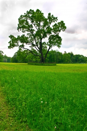 Green meadow with a large beautiful tree photo