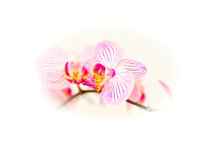 A beautiful orchid branch on a white background Stock Photo - 14584577