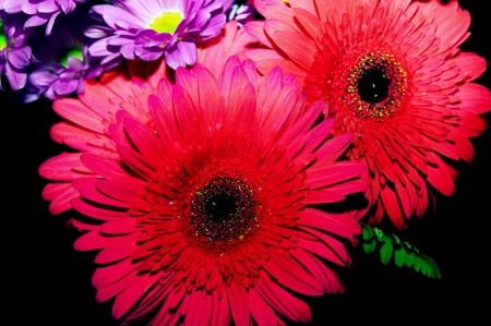 arrange: flowers bouquet arrange  in home Stock Photo