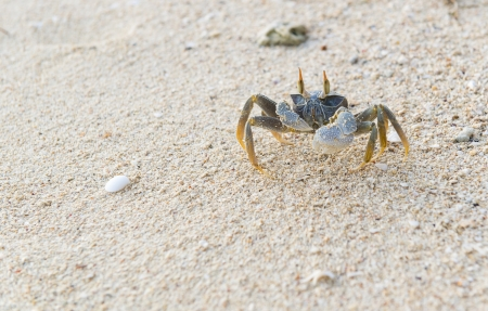 crab on the beach photo