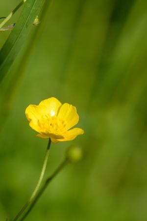 Meadow flowers photo