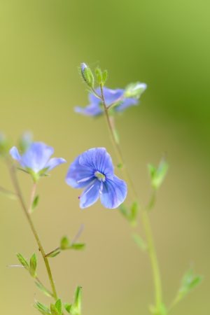 Meadow wild flowers photo