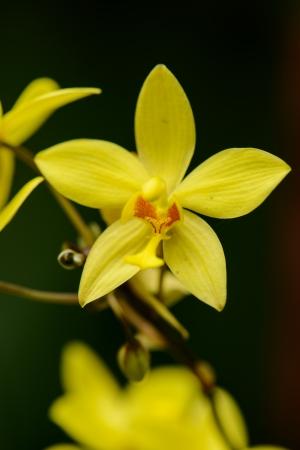 Sri Lanka. Royal Botanic Gardens. Different types of orchids Stock Photo