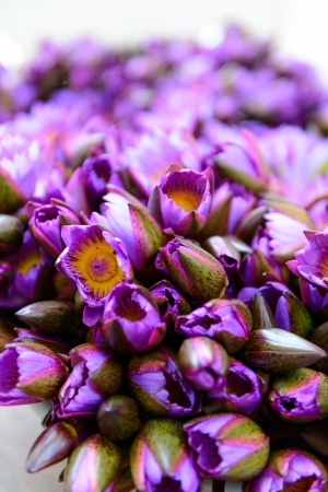 Bouquet of purple lotus. Close-up. Stock Photo