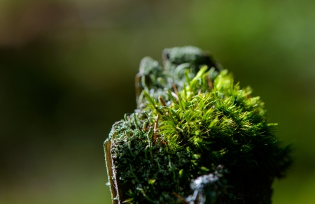 Russia. Nature and the forest. forest plants
