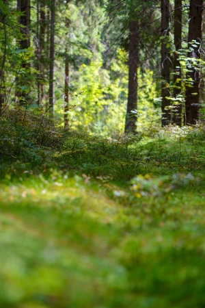Russia. Natural forest landscape Stock Photo - 22030733