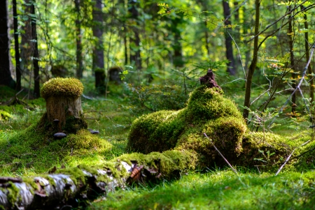 Russia. Nature and the forest. Various forest landscape photo