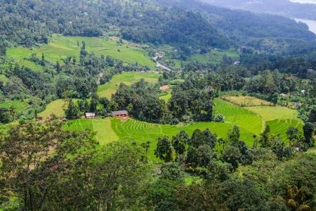 Sri Lanka. Nuwara Eliya. Natural landscape in the tea plantations Stock Photo