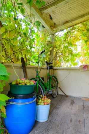 A lot of apples on an apple tree on the veranda of the house. Autumn time Stock Photo