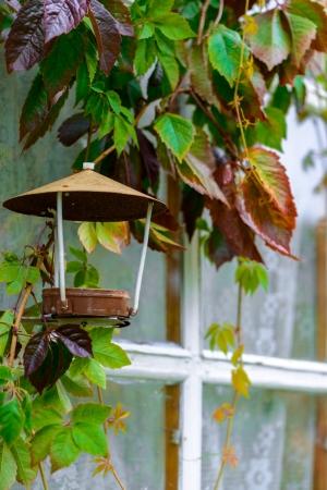 feeder: Beautiful bird feeder.