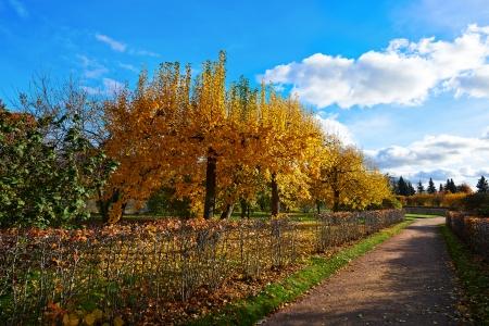City Park Peterhof. Golden Autumn. Russia Stock Photo