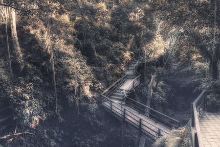 Bridge in Ubuds Monkey Forest Sanctuary with huge old tree with log roots and branches, Bali, Indonesia Stock Photo