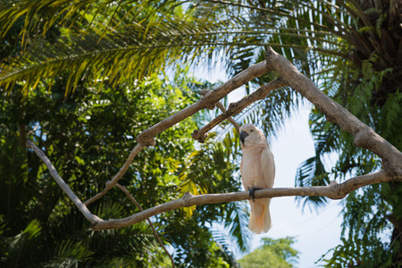 White parrot at Bali Birds Park, Indonesia Stock Photo