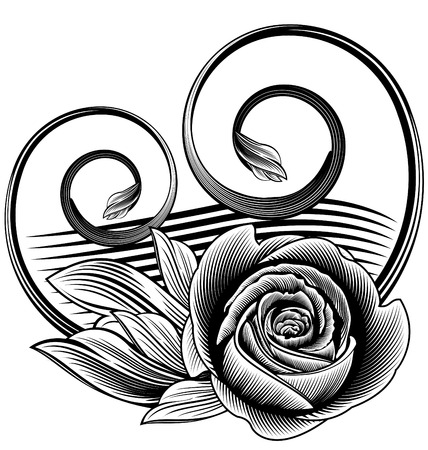 Ornamental rose Illustration