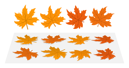 Set of maple leaves. 4 different cloud and heir options fallen to the ground.