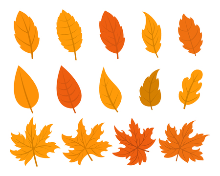 Set of autumn leaves in 14 different variations Illustration