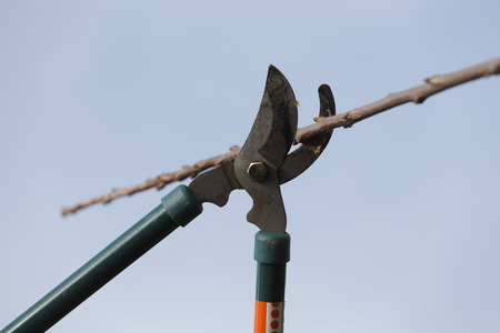 pruning scissors: Spring cleaning in the garden using pruning scissors Stock Photo